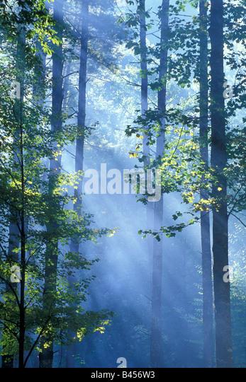 Light Rays filter through forest trees - Stock-Bilder