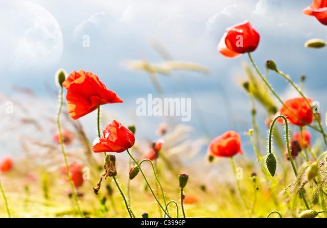 flowers on colorfull background - macro photo - Stock Image