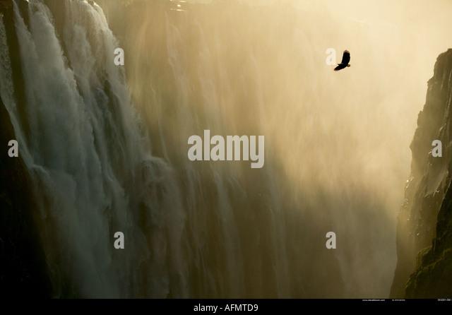 African Fish Eagle in flight Victoria Falls Zimbabwe - Stock Image