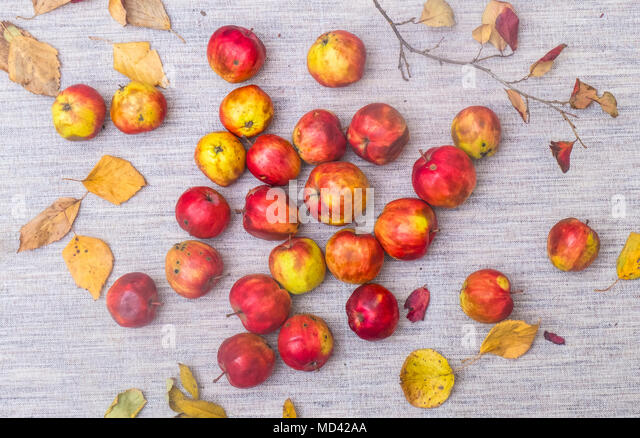 Apples and autumn leaves, overhead view - Stock Image