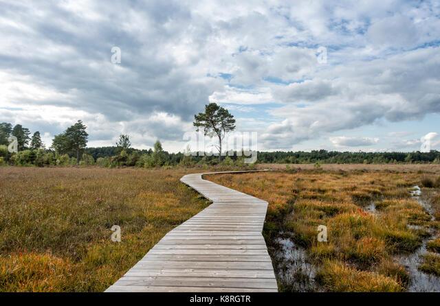 wooden boardwalk across marsh land with moody sky - Stock Image