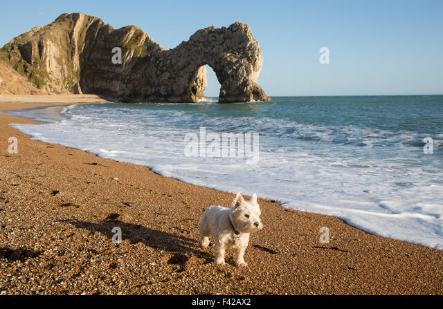 a dog on the beach at Durdle Door, Jurassic Coast, Dorset, England, UK - Stock Image