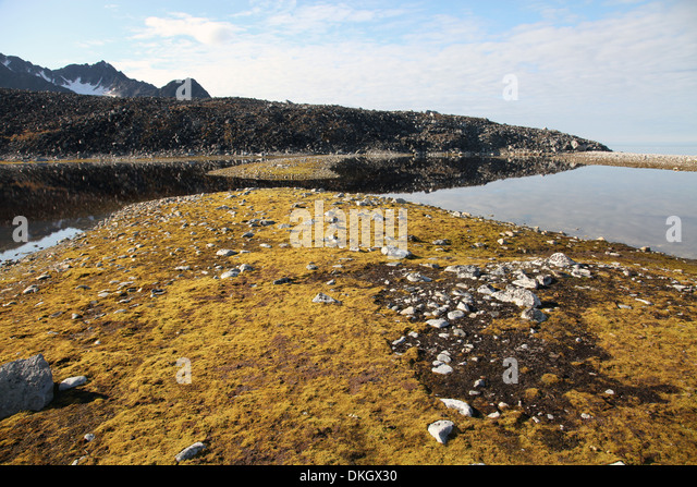 Glacial scree, foreshore, Trinity Hamn, Magdalenefjord, Svalbard - Stock Image