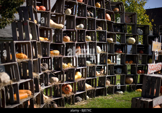 Squash for sale displayed in wooden crates. - Stock Image