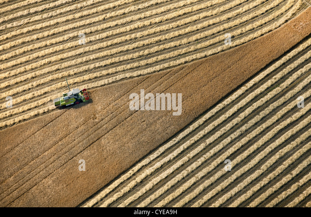 The Netherlands, Donderen, Combine harvester harvesting wheat field. Aerial. - Stock Image