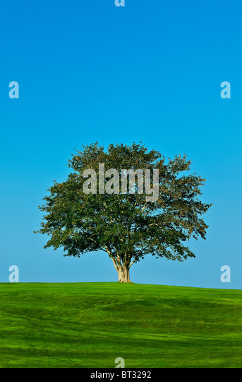 Healthy tree. - Stock-Bilder
