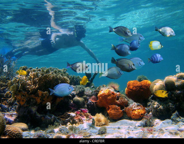 Man underwater snorkeling on a colorful coral reef with school of tropical fish - Stock Image