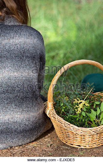 Back View of Woman Sitting by Wicker Basket with Plants - Stock Image
