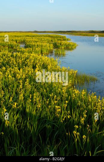 Island Lake Yellow Trail