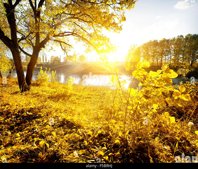Yellow leaves and river in the autumn - Stock Image