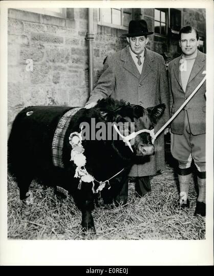 Mr Bull Stock Photos Amp Mr Bull Stock Images Alamy