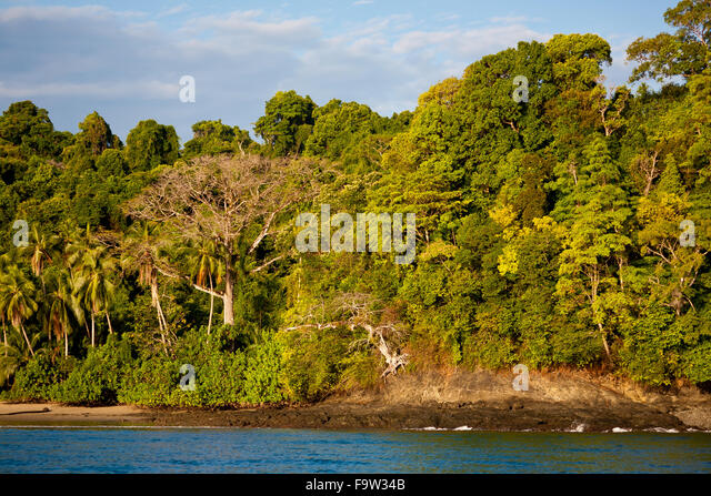Rain forest on the east side of Coiba island national park, Pacific coast, Veraguas province, Republic of Panama. - Stock-Bilder