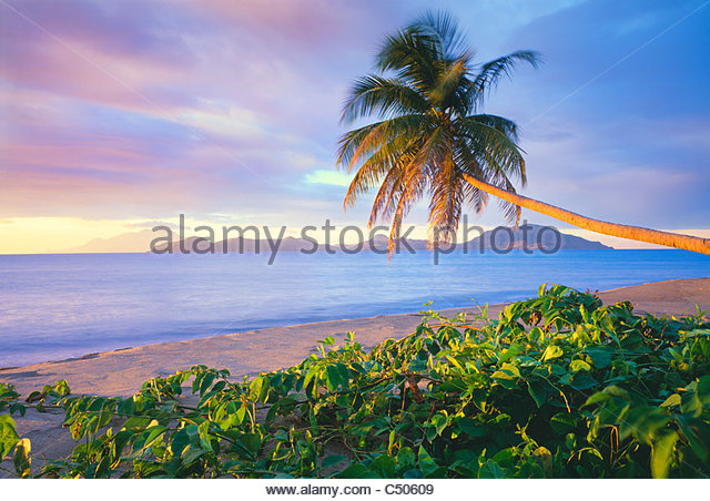 palm tree on Pinney's Beach, with Island of St. Kitts in distance. Island of Nevis, Leeward Islands, Lesser - Stock-Bilder