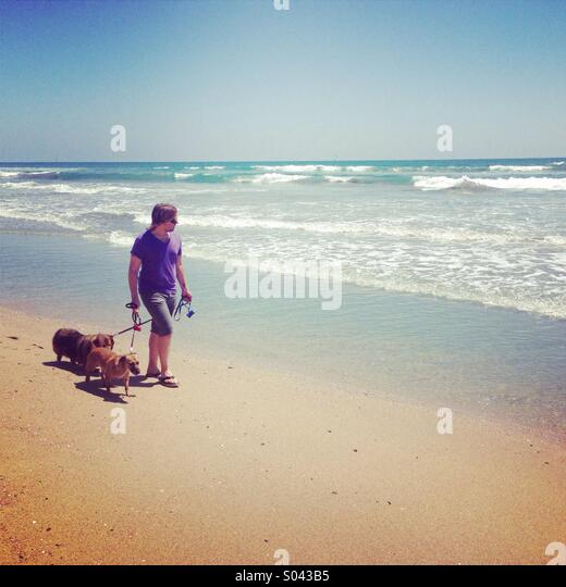 man walking dogs on the beach - Stock Image