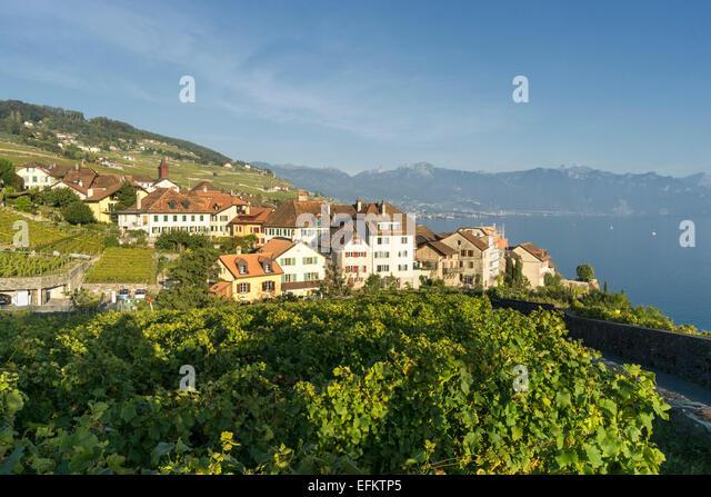 Rivaz Village , Vineyards  , Lavaux region, Lake Geneva, Swiss Alps,  Switzerland - Stock Image