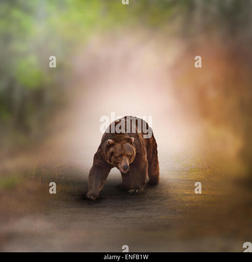 Grizzly Bear Walking In A Wood - Stock Image