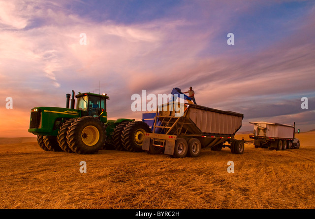 A truck driver supervises the loading of his grain truck from a grain cart at sunset / Pullman, Palouse Region, - Stock Image