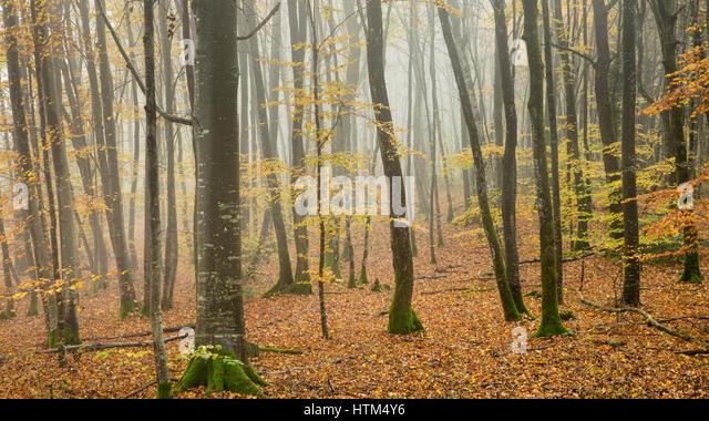 Misty autumnal woods nr Baume-les-Messieurs, Jura, Franche-Comté, France - Stock-Bilder