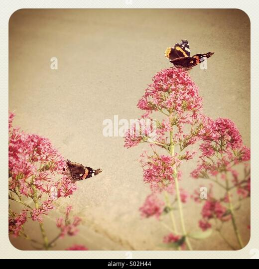 Romantic and nostalgic image of butterflies on pink flowers, vintage background - Stock-Bilder