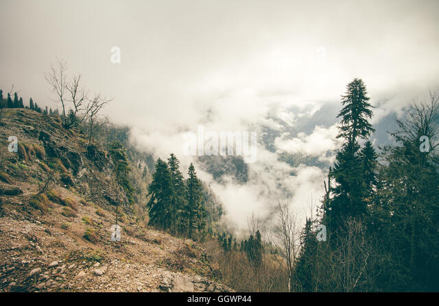 Coniferous Forest with cloudy Mountains Caucasus beautiful landscape moody weather colors - Stock Image