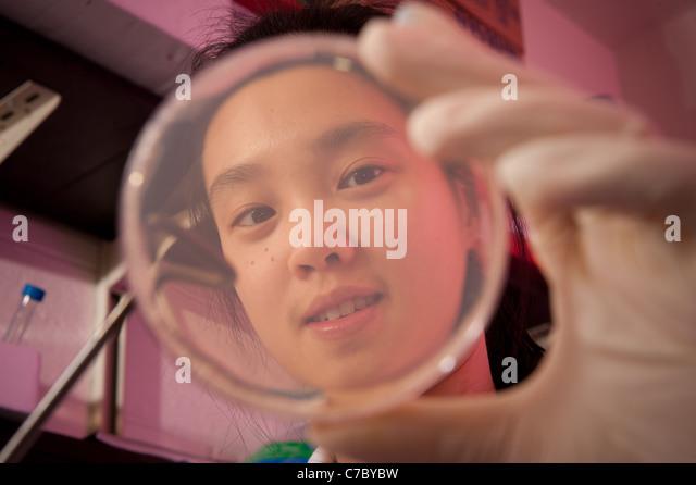 Scientist examining petri dish - Stock-Bilder