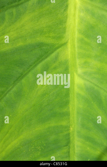 Green leafy texture for backgrounds or wallpaper. - Stock Image