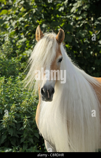 long manes stock photos - photo #34