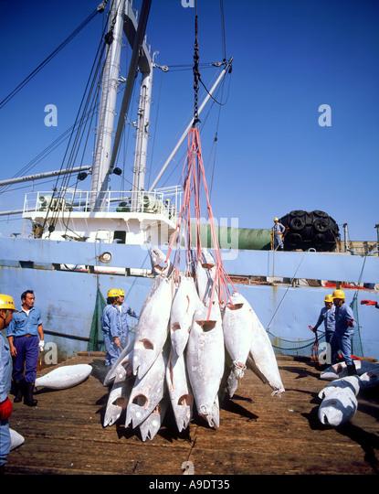 Unloading tuna Shimizu Japan - Stock-Bilder