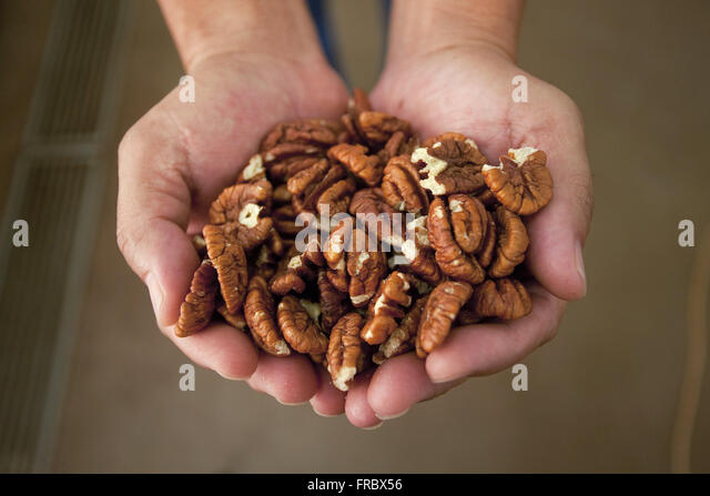 Walnuts or pecan piece selected for commercialization - Stock Image
