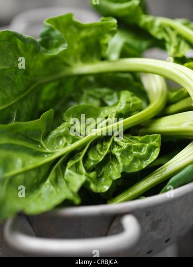 Close up of spinach in colander - Stock-Bilder