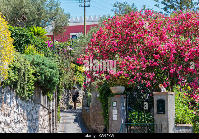 flower filled home gardens on the island of cpari, italy - Stock Image