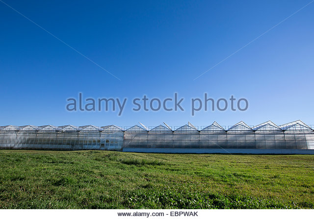 Greenhouses in a row below blue sky - Stock Image