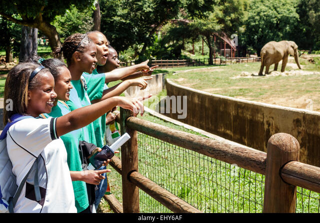 Johannesburg South Africa African Zoo Black teen girl student class field trip animal exhibit elephant - Stock Image