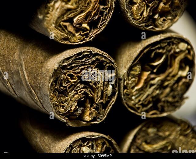 Dry brown cigars - Stock Image