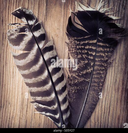 Two turkey feathers - Stock Image