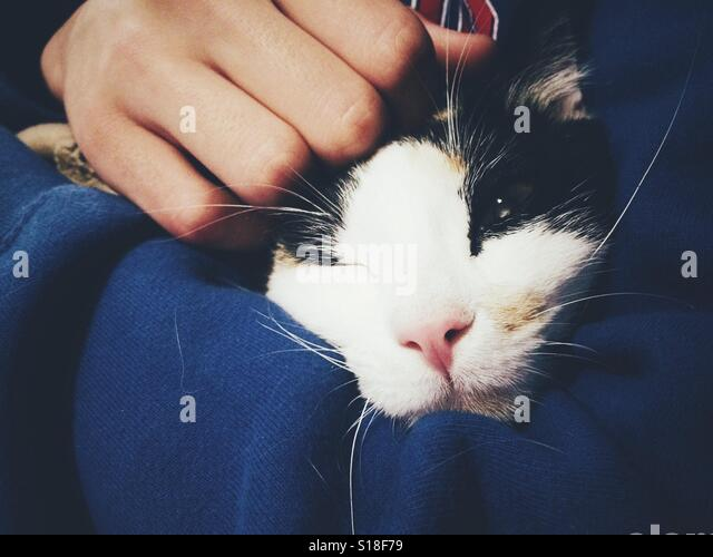 Cat on teenager's arms. - Stock-Bilder