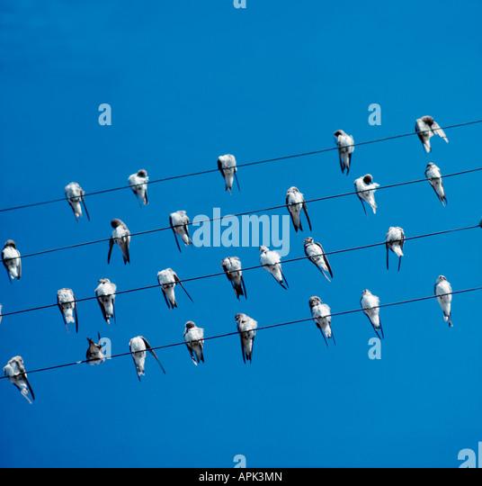 Fenetres stock photos fenetres stock images alamy for Hirondelle de fenetre