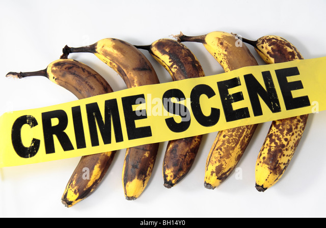 Crime Scene (Do Not Cross) tape resting on slowly rotting bananas demonstrating it's a crime to waste food. - Stock Image