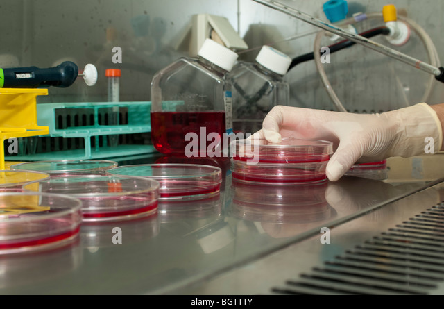 Microbiology Laboratory Cell cultures. Gloved hand holding a pipette over petri dishes containing cell cultures. - Stock-Bilder