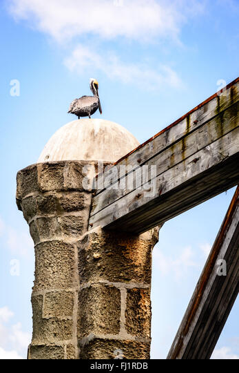 Brown Pelican on Sail Loft Pillars, Nelson's Dockyard, English Harbour, Antigua - Stock Image