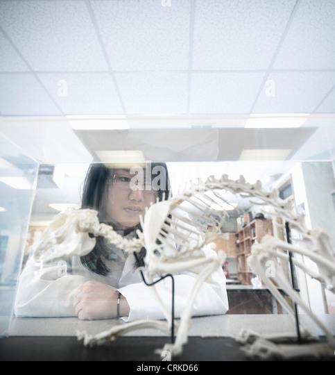 Biology student examining model - Stock Image