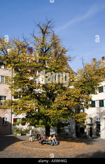 Switzerland Zuerich St Peterhofstatt autumn historic buildings - Stock Image