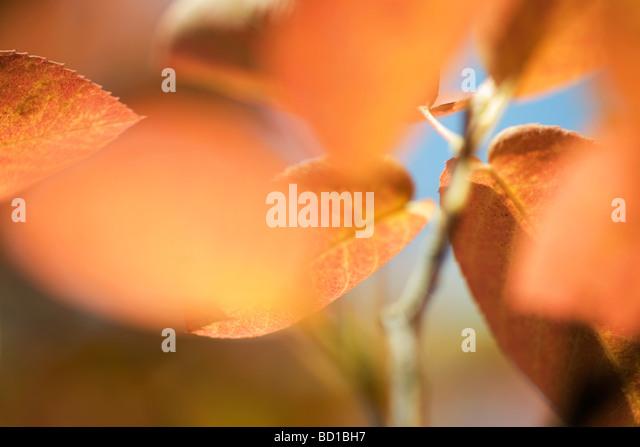 Autumn foliage, extreme close-up - Stock-Bilder