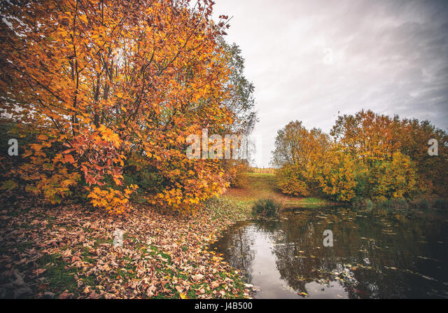Colorful trees by a small pond in the fall with autumn leaves in the grass and silent water in the lake - Stock Image