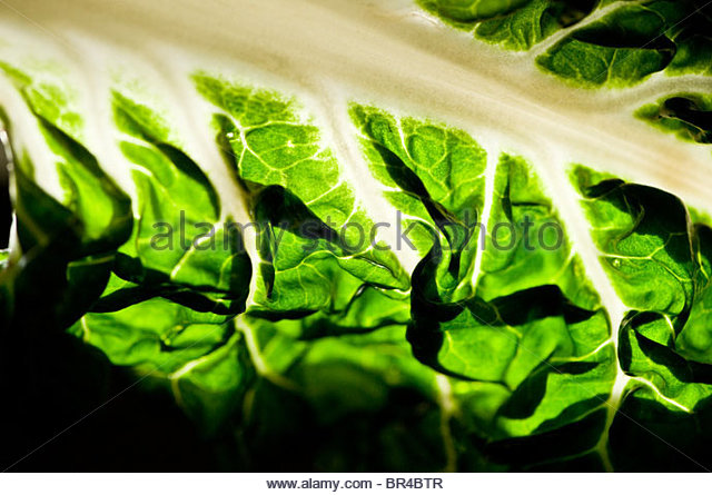 Close-up of green chard in Decatur, Georgia. - Stock-Bilder