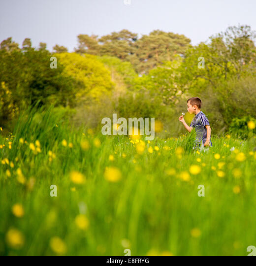 Boy in field blowing dandelion head - Stock-Bilder