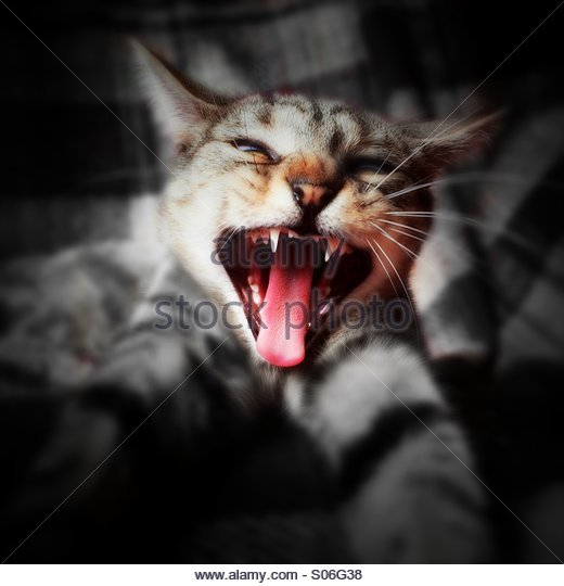 Cat with attitude - Stock Image
