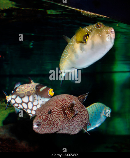 Tropical fish colourful stock photos tropical fish for Ocean fish species