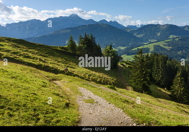 View, Hundwiler Höhe, Hundwil height, Switzerland, Europe, canton, Appenzell, Ausserrhoden, wood, forest, spruces, - Stock Image