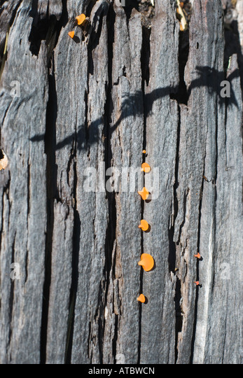 Mushrooms growing on tree trunk, close-up - Stock Image